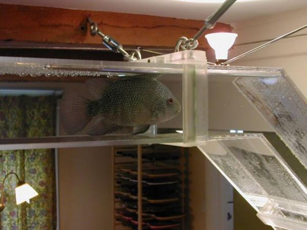 Aquarium Schlauch 1