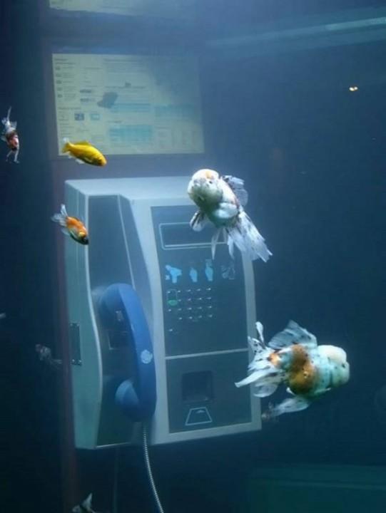 Aquarium Telefonzelle  1