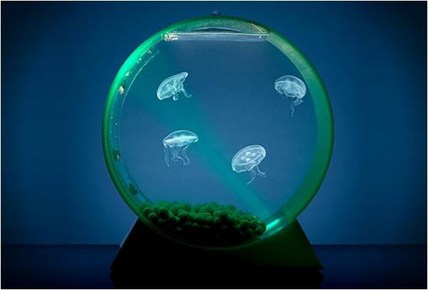 Aquarium fuer Quallen