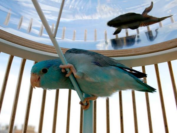Aquarium und Vogelkaefig 2