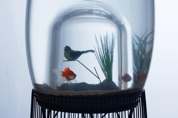 Aquarium und Vogelkaefig