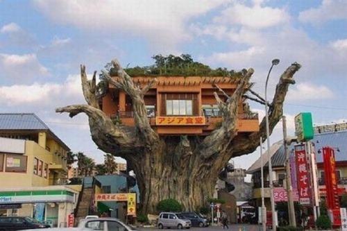 Das Restaurant auf dem Baum