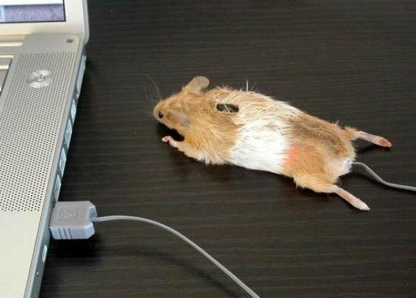 Mouse - Maus