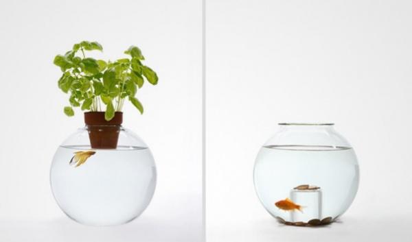 Multifunktionales Aquarium 1