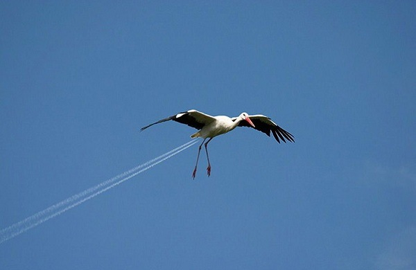 Storch