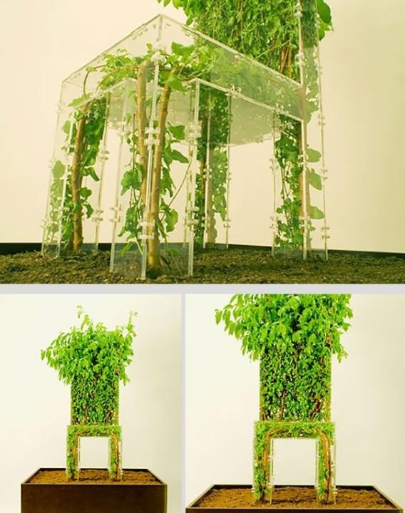 Stuhl als Pflanze