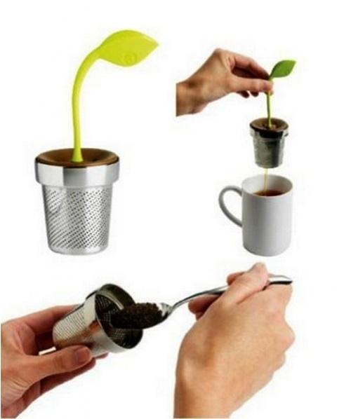 Teekanne -Pflanze
