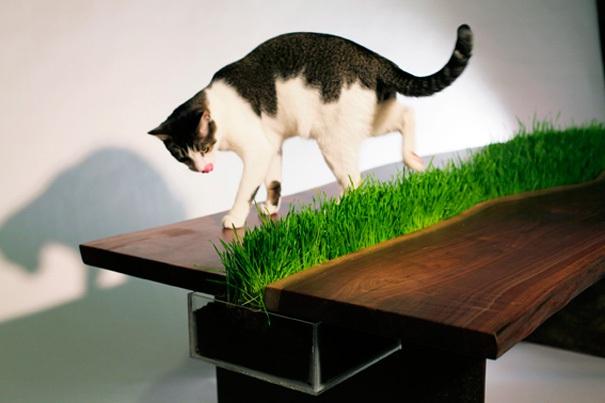 Tisch mit Gras