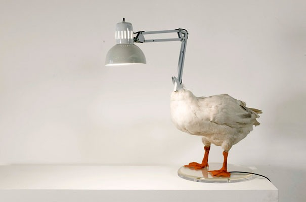 duck Kreative Beleuchtung im Haus 10
