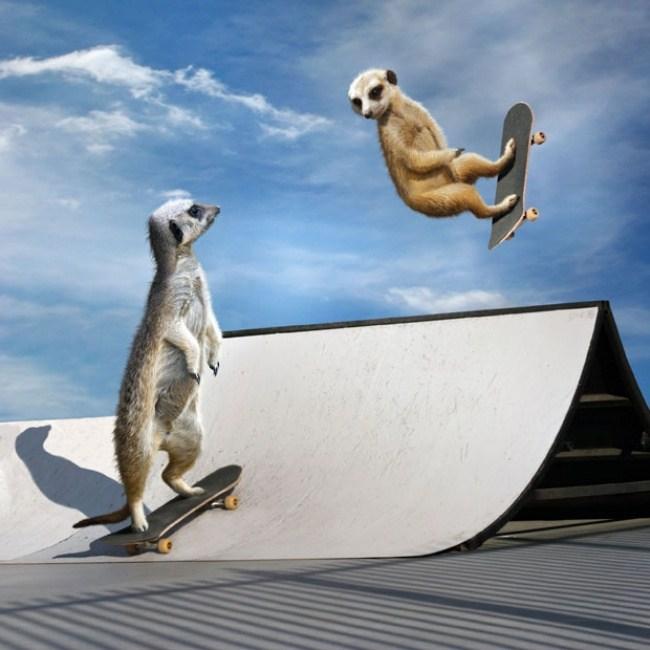 Juni - Ausfuehrung von Tricks auf einem Skateboard