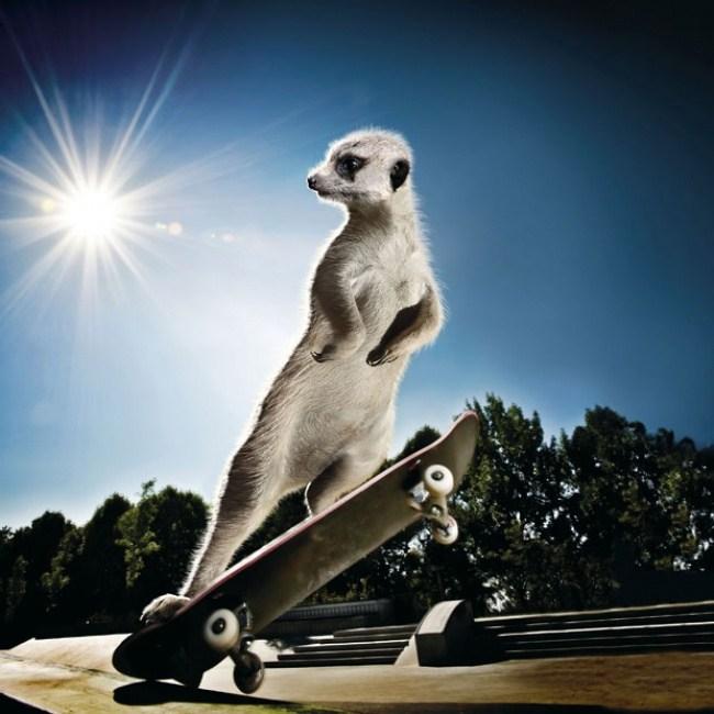 Oktober - Skateboarding