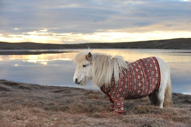Ponys in Pullover 01