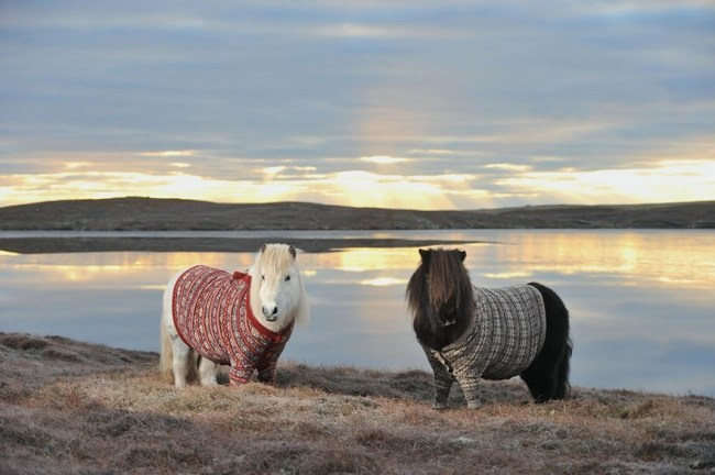 Ponys in Pullover 02