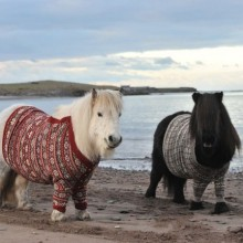 Ponys in Pullover 06