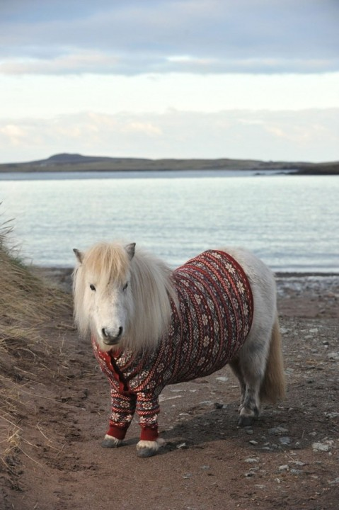 Ponys in Pullover 07