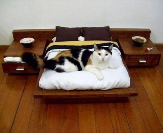 Alles wie bei Menschen - Möbel für Katzen