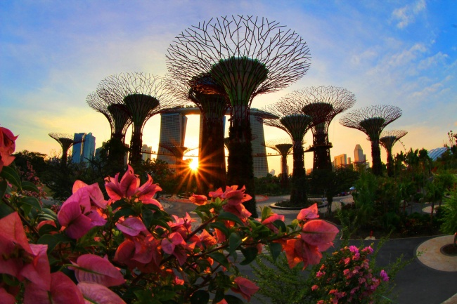 Botanische Bay Gärten von Singapur 14