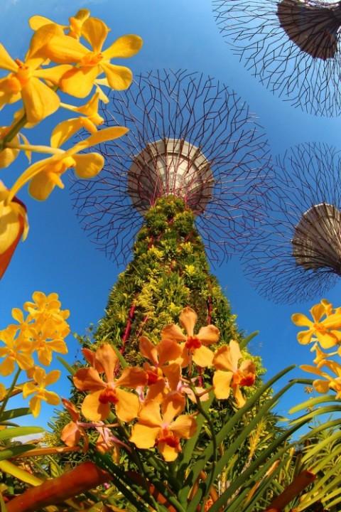Botanische Bay Gärten von Singapur  3