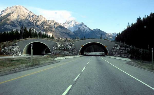 Brücke für Tiere 1