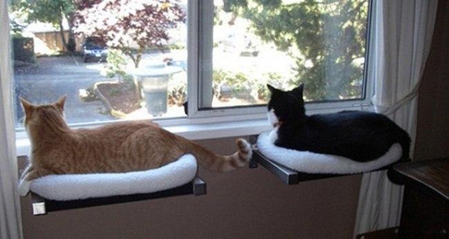 Gemuetliche Katzenliege
