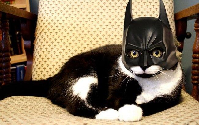Kater Batman