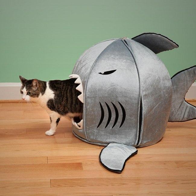 Katze Haus als Hai
