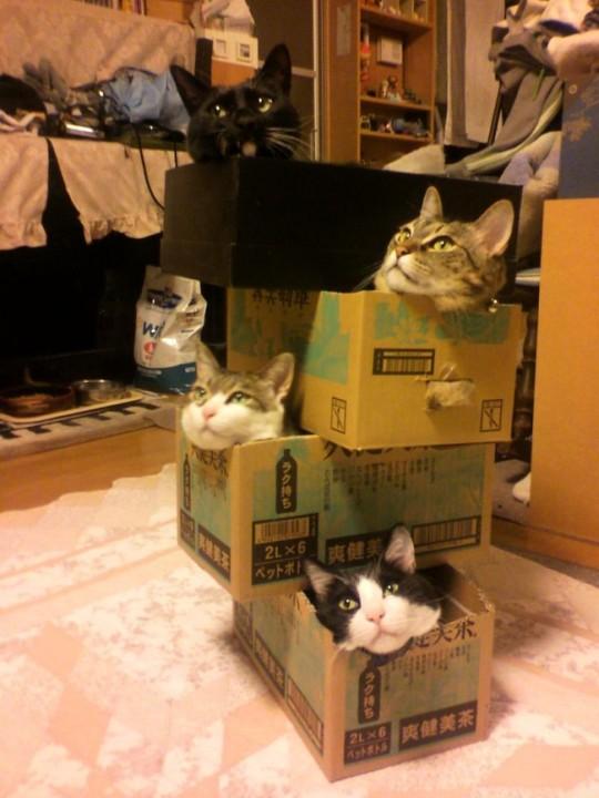 Original Möbel für Katzen 1