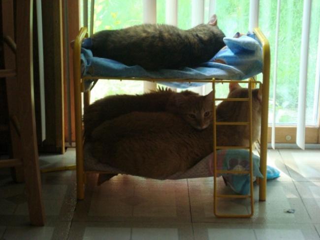Original Möbel für Katzen
