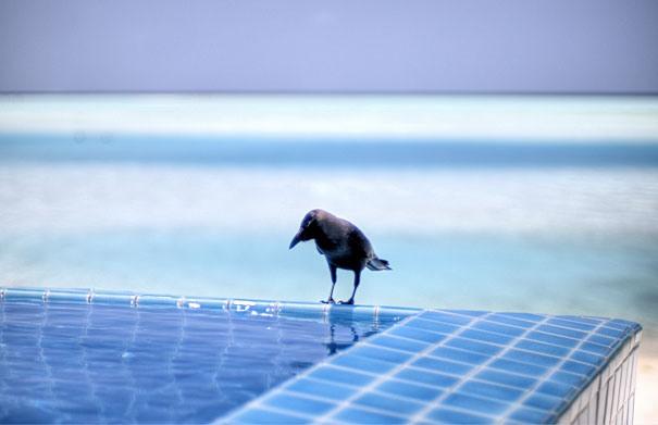 Sued-Male-Atoll, Malediven 1