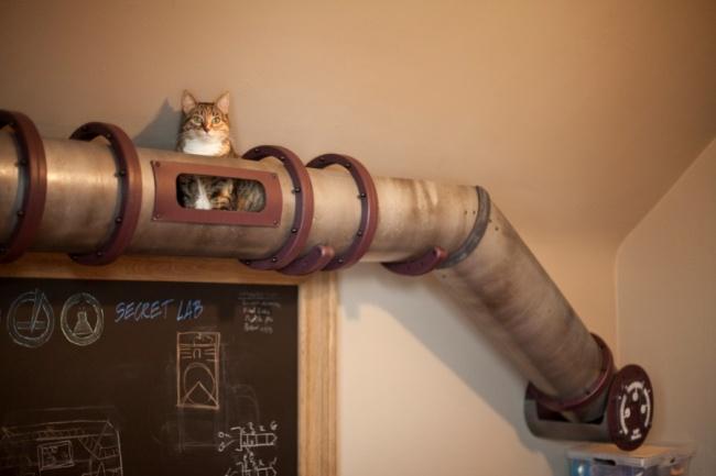 Weg für Katzen 1