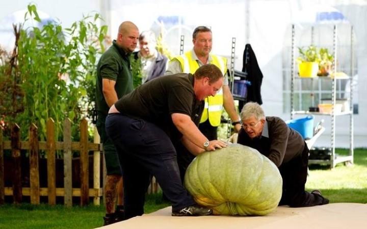 Erstaunlich Riesengemüse aus England -9