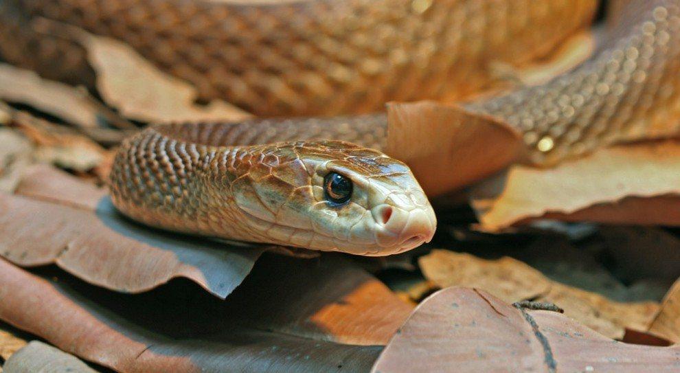 Die 10 Gefährlichsten Schlangen Der Welt