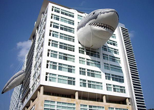 Discovery Channel Shark 2