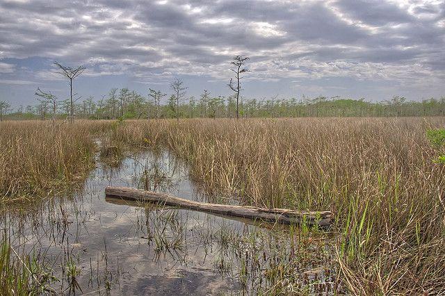 Everglade Marschland