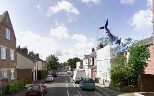 Haifisch Auf Dem Dach