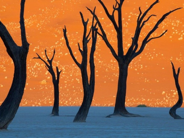 Kameldorn in Namibia