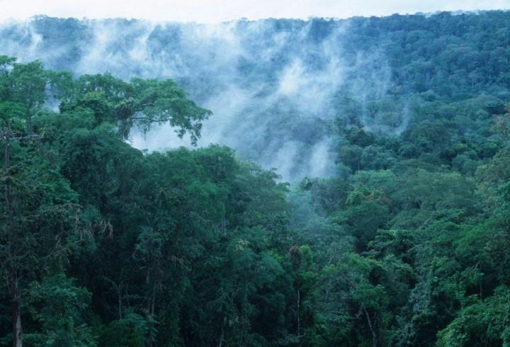 Regenwald Kongo