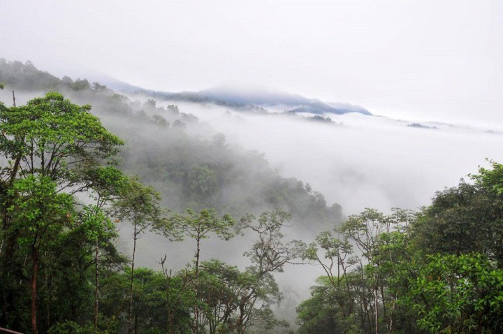 Regenwald von Ecuador