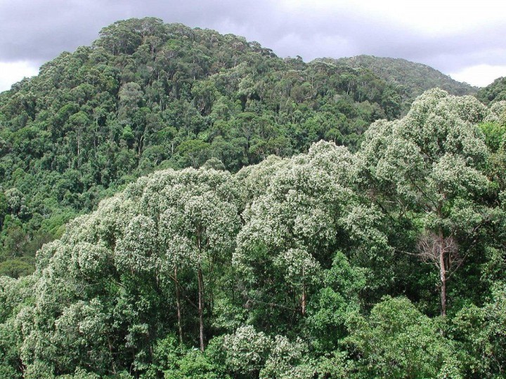 Sinharaja Forest, Sri Lanka
