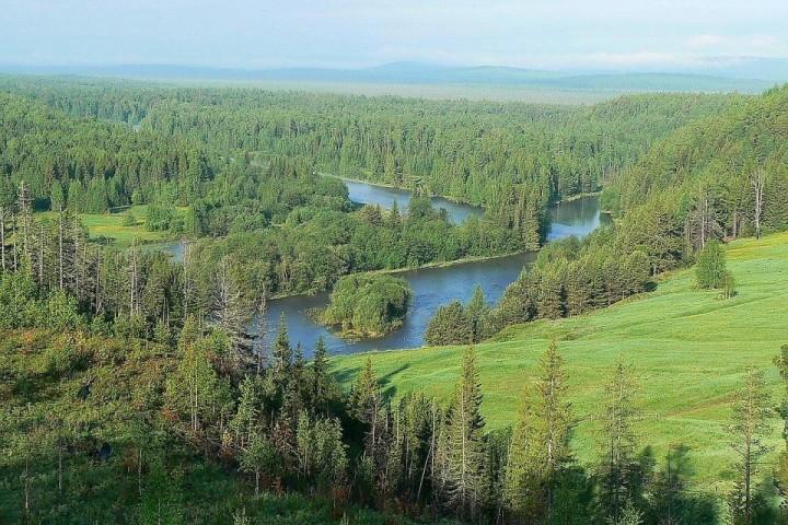Taiga Wald