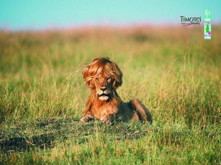 Timotei Lion