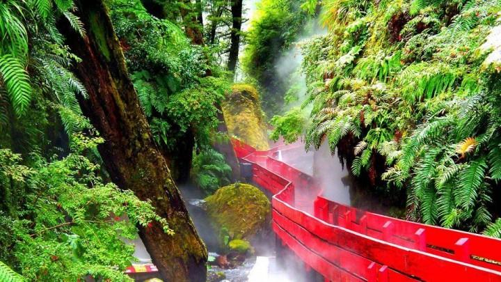 Valdivian Regenwald