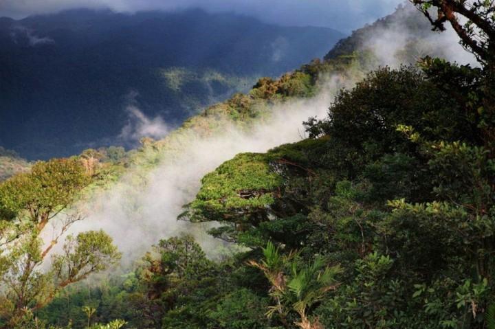 Wald von Monteverde, Costa Rica