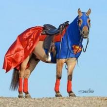 Halloween-Kostüm für Pferde Superhorse Pferde Kostüme für halloween -