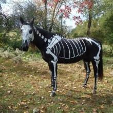 Halloween-Kostüme für Pferde DIY-Ideen Skelett malen Kostüm