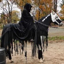 Halloween-Kostüme für Pferde DIY-Ideen, kreatives Haloween Kostüm-Ideen