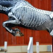 Halloween-Kostüme für Pferde Skelett DIY-Pferd-Kostüm für halloween -