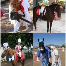 Halloween-Kostüme für Pferde, die lustigen halloween-Kostüme, kreative Kostüm-Ideen