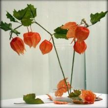 Herbst Deko-Ideen mit physalis Glas vase Herbst Tischdekoration