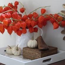 Herbst Deko-Ideen mit physalis frisches Bukett Porzellan vase